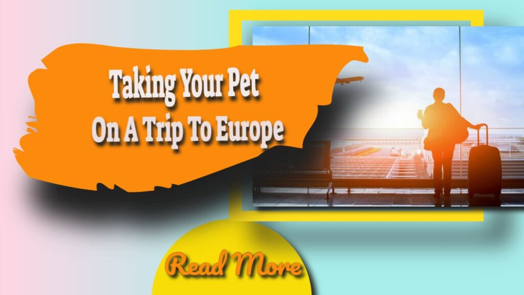 taking your pet on a trip to europe